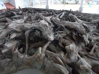 埋没林博物館10