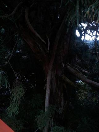 流谷八幡神社 15
