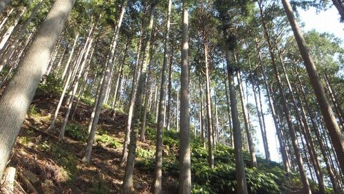 第二の森4