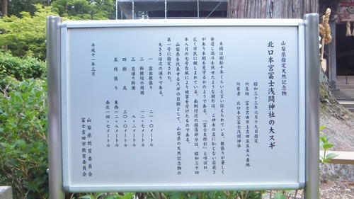 北口本宮さんの森 4