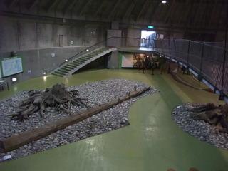 埋没林博物館7