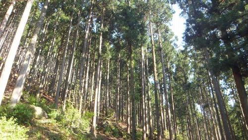 第二の森2
