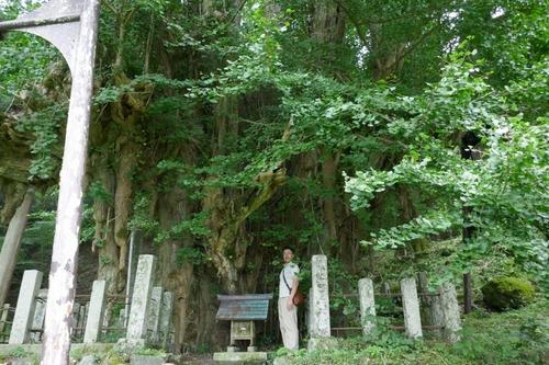 菩提寺のイチョウ 18