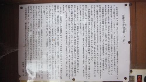 常瀧寺の大公孫樹4