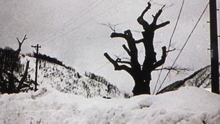 守られる木 3