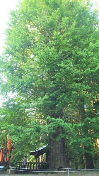 北口本宮さんの森 3