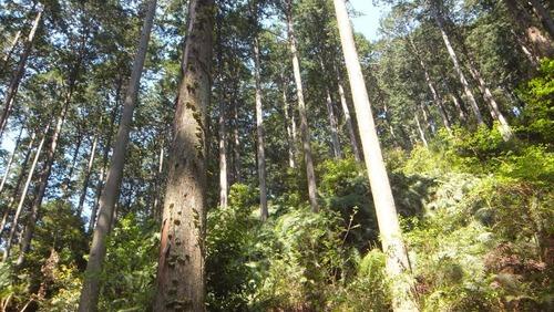 下草の森1