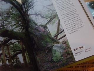 巨樹の本 2