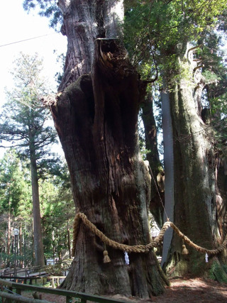 杉の大杉 10