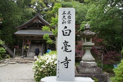 白毫寺の九尺藤 1