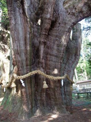 杉の大杉 9