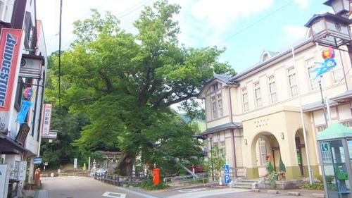 木の根橋8