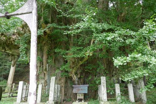 菩提寺のイチョウ 3