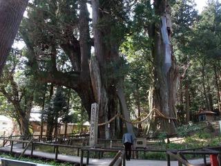 杉の大杉 5