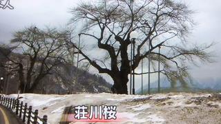 守られる木 4