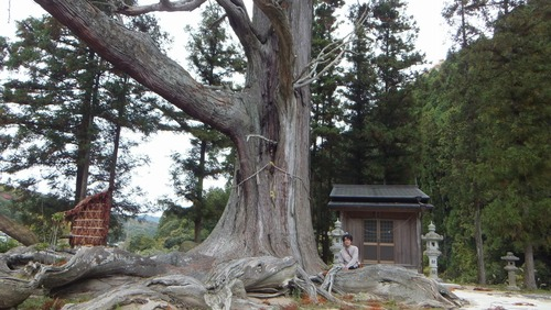 夏山の大杉 8