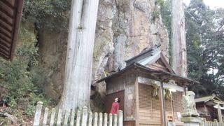 巌石神社の夫婦ヒノキ 15
