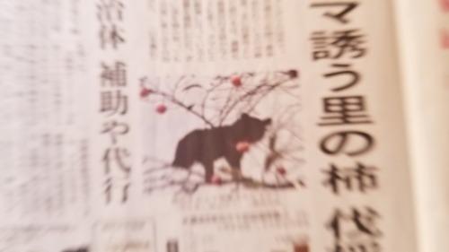 熊出没の記事