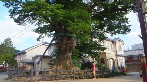木の根橋9