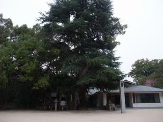こんな大木も・・・