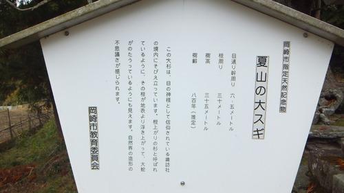 夏山の大杉 1