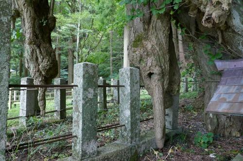 菩提寺のイチョウ 7