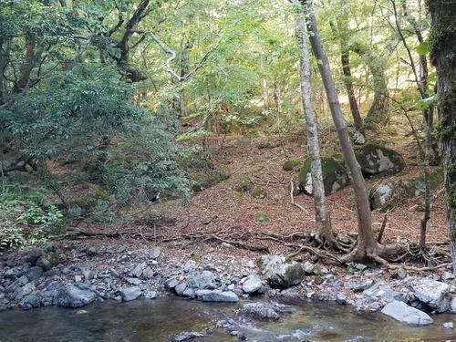 渓谷の天然林4