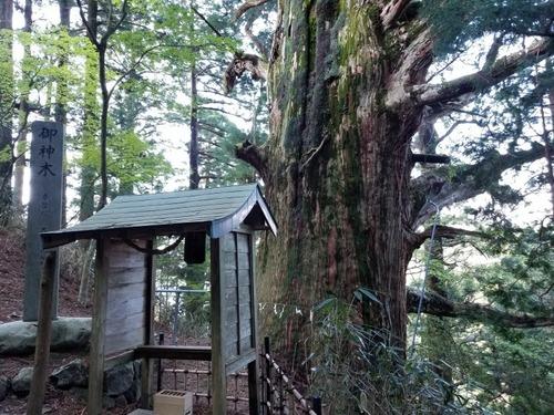 春埜杉 1
