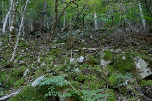 渓谷の天然林6