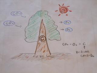 木の固定過程