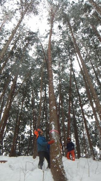 伐採実習9