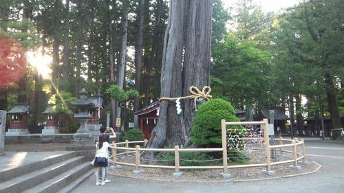 北口本宮さんの森 10