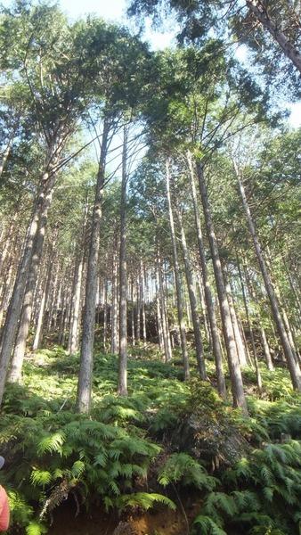第二の森3