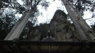 巌石神社の夫婦ヒノキ 11