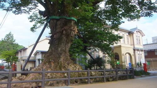 木の根橋7