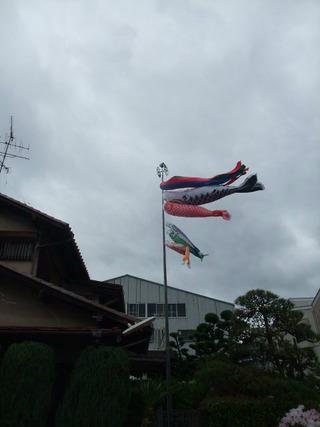 鯉のぼり 2012
