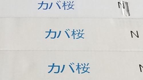 カバ桜フローリング2