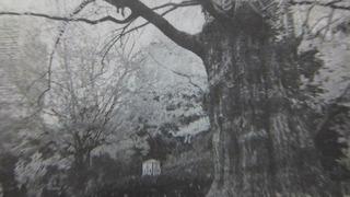 守られる木 9
