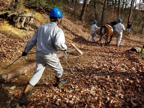 戸田先生と愉快な仲間たちの伐採授業 2019年度 2