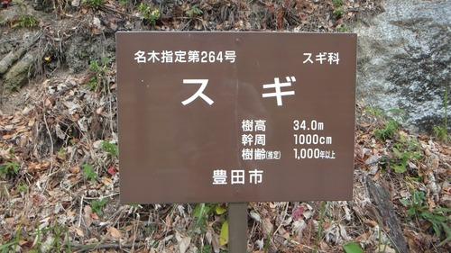 堂庭のスギ(千年杉) 2