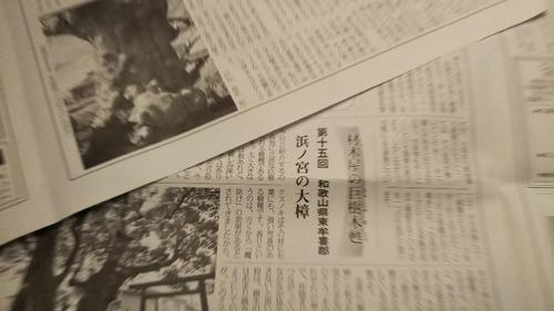 戸田昌志が寄稿する巨樹の記事