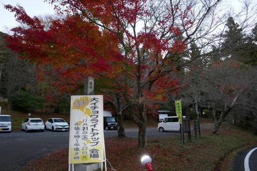 菩提寺のイチョウ 黄葉バージョン 12
