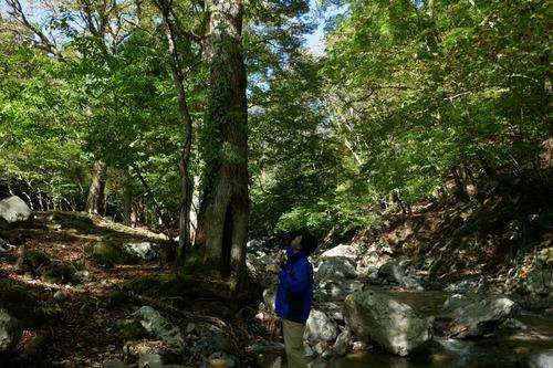 渓谷の天然林5