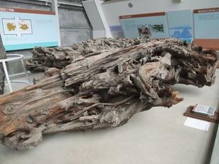 埋没林博物館9
