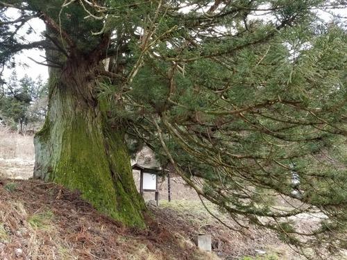 臥雲の三本杉 2
