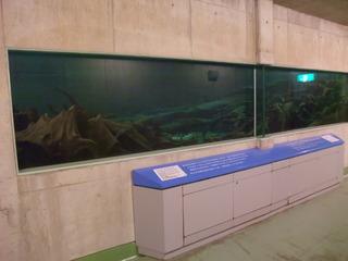 埋没林博物館13