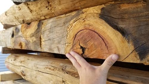 天然林の贈り物