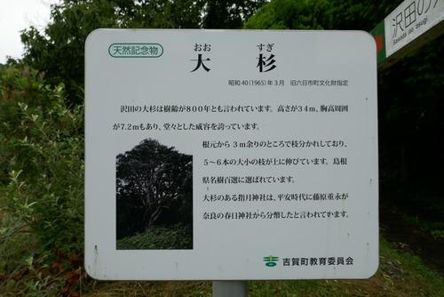 沢田の大杉 1