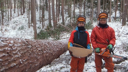 伐採授業15