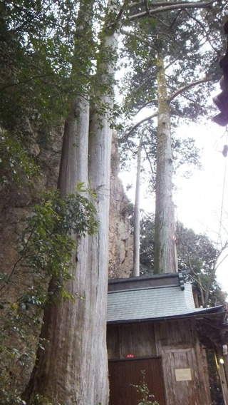 巌石神社の夫婦ヒノキ 14